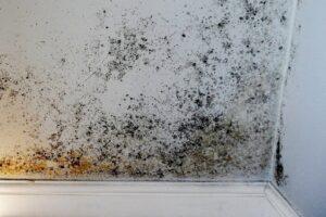 humedades paredes